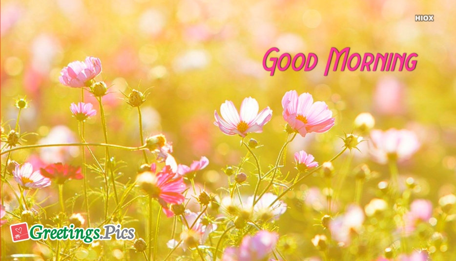 Good Morning Friends Greetings, Cards