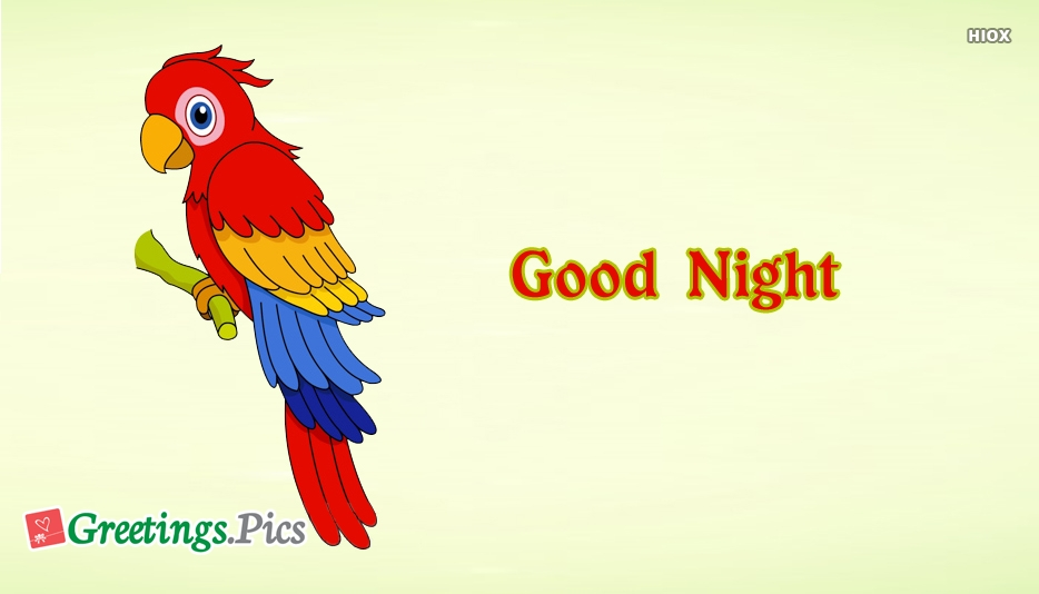 Good Night With Parrot