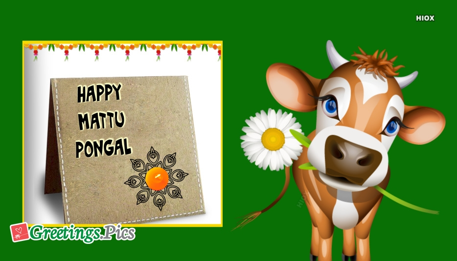 Pongal Greetings | Happy Pongal Greeting Cards Images