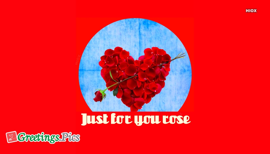 Just For You Rose