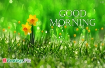Flowers With Good Morning Images
