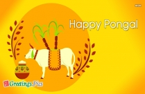 Pongal Greetings Images